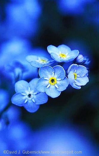 ~~Forget-me-not~~
