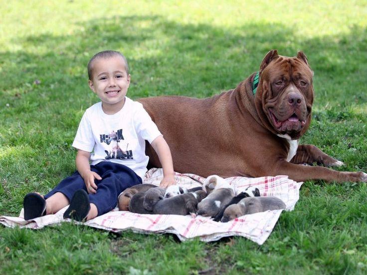 Exotic Giant Dog Kennels