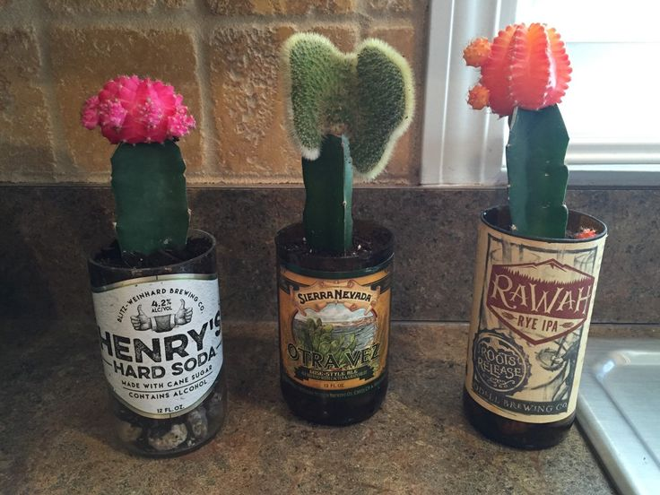 Craft Beer Plant Pot , Plant Pots, Planter, recycled beer bottle, Pale Ale, IPA, man gift, gift, Friend, beer lover, craft beer, Succulents by TheDrunkenSeagull on Etsy https://www.etsy.com/listing/287669345/craft-beer-plant-pot-plant-pots-planter