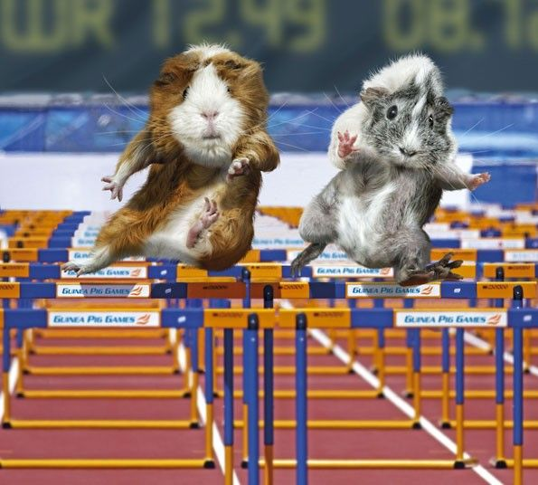 Guinea Pig Games.   That is about how I would look trying to jump hurdles :)