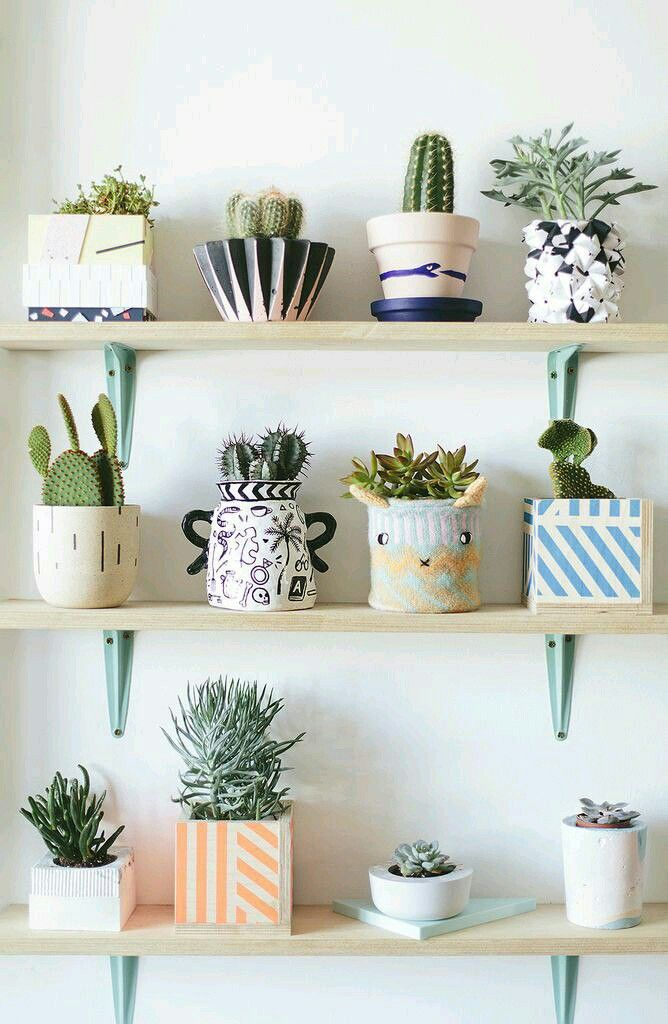 succulents in adorable pots