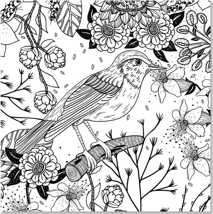 Coloring Books Adult Colouring Design Studios Floral Designs Peter Otoole