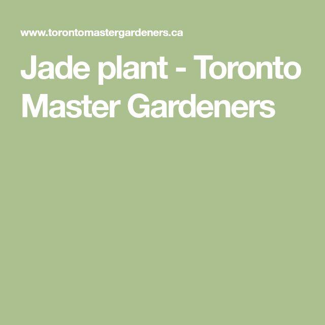 Jade plant - Toronto Master Gardeners