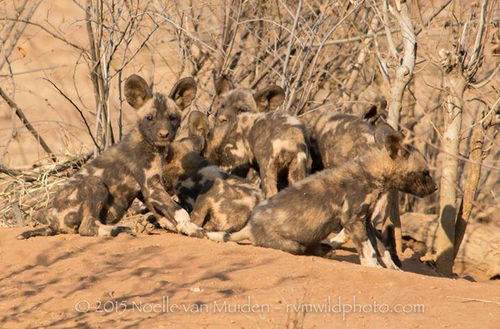 Madikwe Hills - Timeline Photos (scheduled via http://www.tailwindapp.com?utm_source=pinterest&utm_medium=twpin&utm_content=post11227820&utm_campaign=scheduler_attribution)