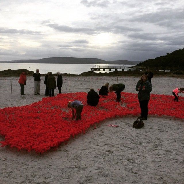 Poppies at dawn on Middleton Beach in Albany.  Photo: Gerard Cameron  #AnzacABC #AnzacDay #Anzac100 #Albany