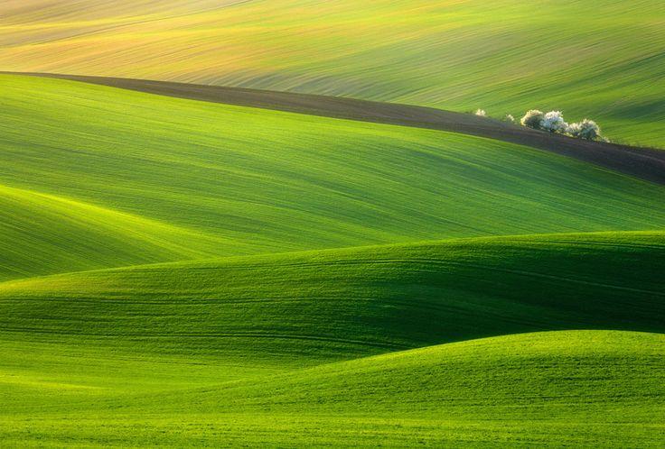HillsPhotography Awards, Krzysztof Browko, Spring Time, Nature, Green, Czech Republic, Springtime, Krzysztofbrowko, World Photography