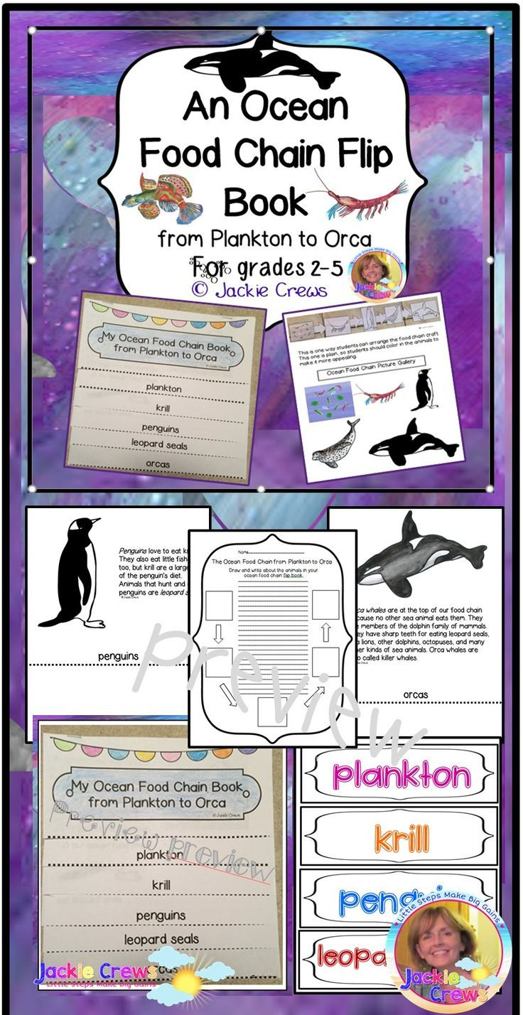 AN OCEAN FOOD CHAIN FLIP BOOK from PLANKTON TO ORCA w