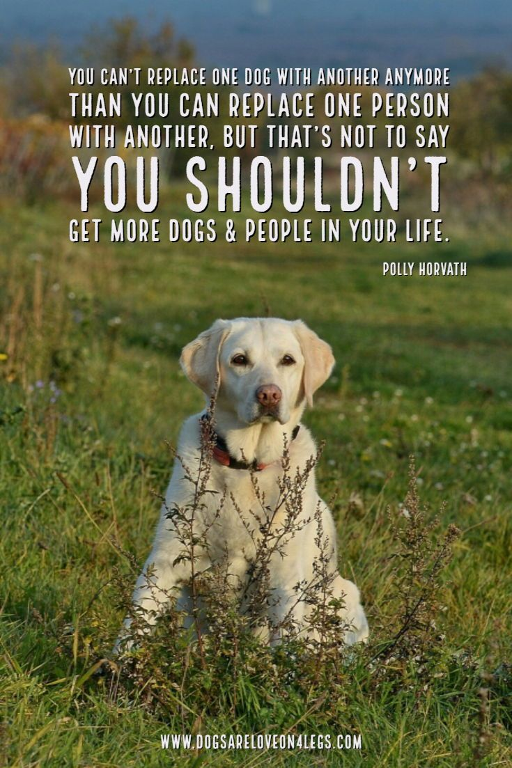 Dog Quote You Can T Replace One Dog With Another Dog Dog Quotes Inspirational Quotes Funny Dog Adoption Quotes Dog Quotes Inspirational Animal Quotes