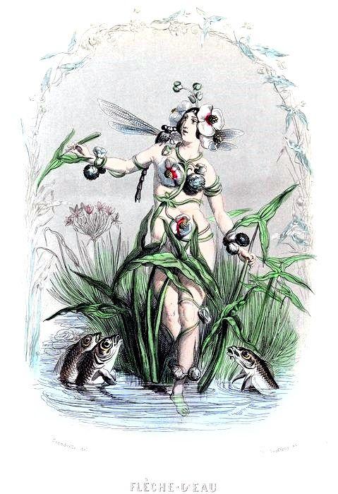 Fleche d'eau, or Arrowhead Fairy, by Grandville