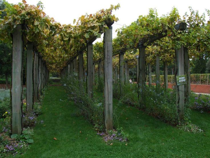 palissage pour vignes sur poteaux en bois garden pinterest pergolas and gardens. Black Bedroom Furniture Sets. Home Design Ideas