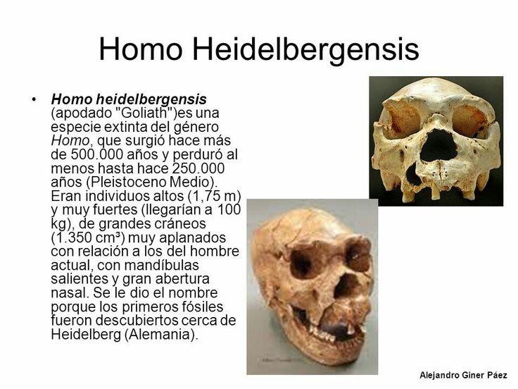 Homo heidelbergensises unaespecieextintadelgéneroHomo, que surgió hace más de 600000 años y perduró al menos hasta hace 200000 años.