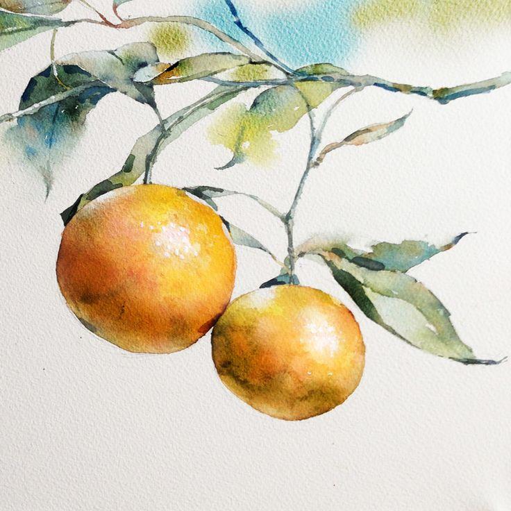 https://www.behance.net/gallery/27946205/Clementine-in-watercolor