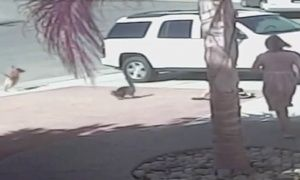 Cat saves boy from dog attack - video | World | The Guardian