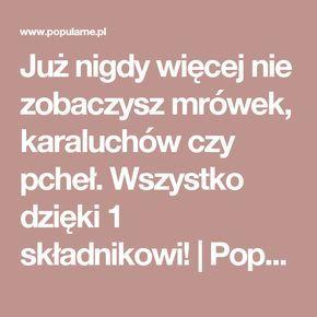 Już nigdy więcej nie zobaczysz mrówek, karaluchów czy pcheł. Wszystko dzięki 1 składnikowi! | Popularne.pl