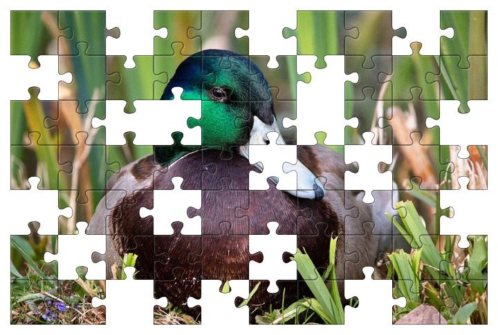 Free Jigsaw Puzzle Online - Duck