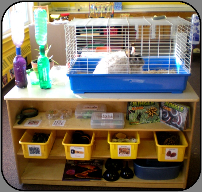 """Preschool Science area - with a """"living thing"""" & variety of materials - labeled and accessible to children.  from Small Steps Learning Academy"""