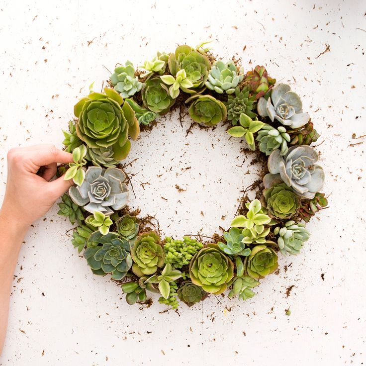 Learn how to make a succulent wreath with this easy tutorial.