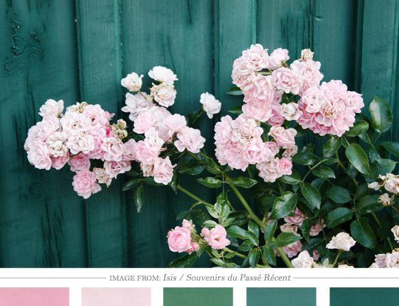 Combinación de colores: Sweden Ii, Color Schemes, Flowers Colors, Daily Inspiration, Colors Palettes, Colors Schemes, Pink Rose, Colour Palettes, Colors Inspiration