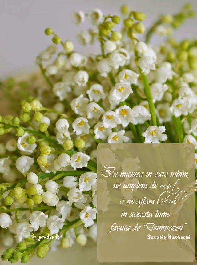 #citat #savatiebastovoi despre #iubire #dragoste #rost #sensulvietii #lacramioare