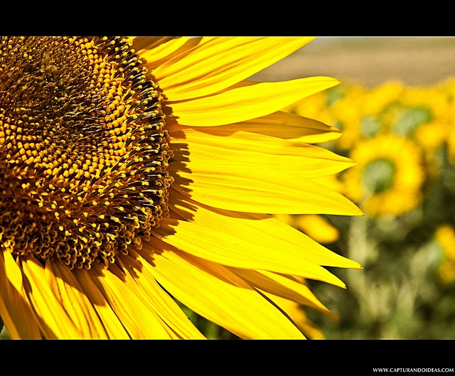 sunshine yellow                                                                                                                        ...YELLOW COLOUR..             by        Óscar Armenteros      on        Flickr