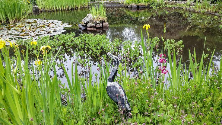 Dunskey gardens