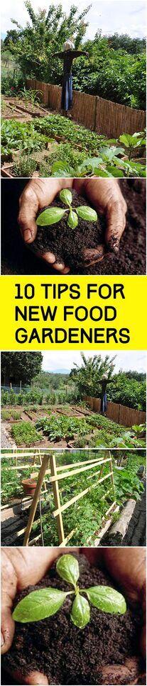 Genial 10 Tips For New Food Gardeners