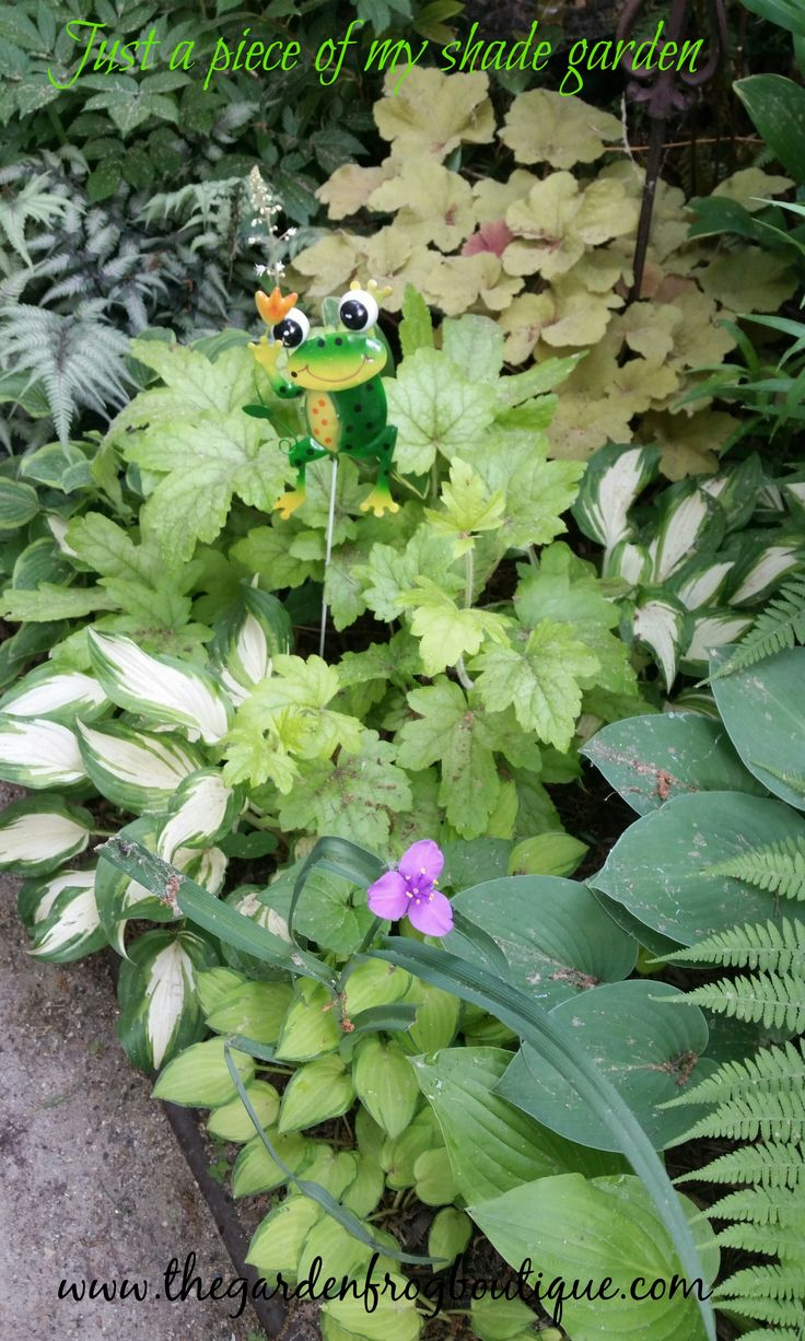 190 best perennials shade images on pinterest shade plants 6 must have perennials for a shade garden dhlflorist Images