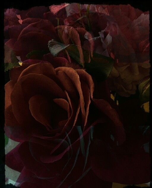 Roses...in a new dimension.