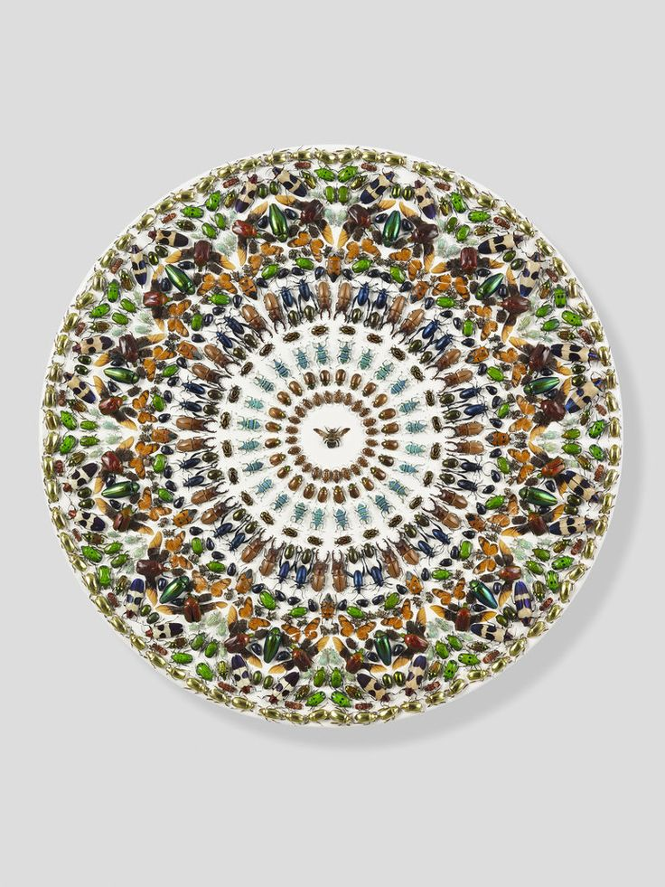 Damien Hirst Limbo, 2009 Entomological specimens and Hammerite paint on canvas Diameter: 610 mm   24 in