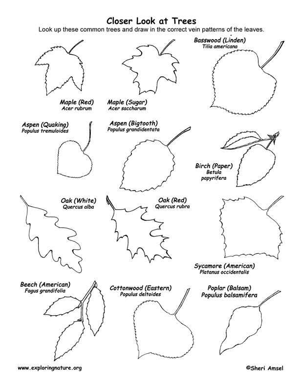 Deciduous Tree Identification by the Leaves