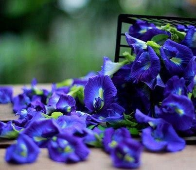 1000 blue butterfly pea seeds clitoria ternatea heirloom by stseed