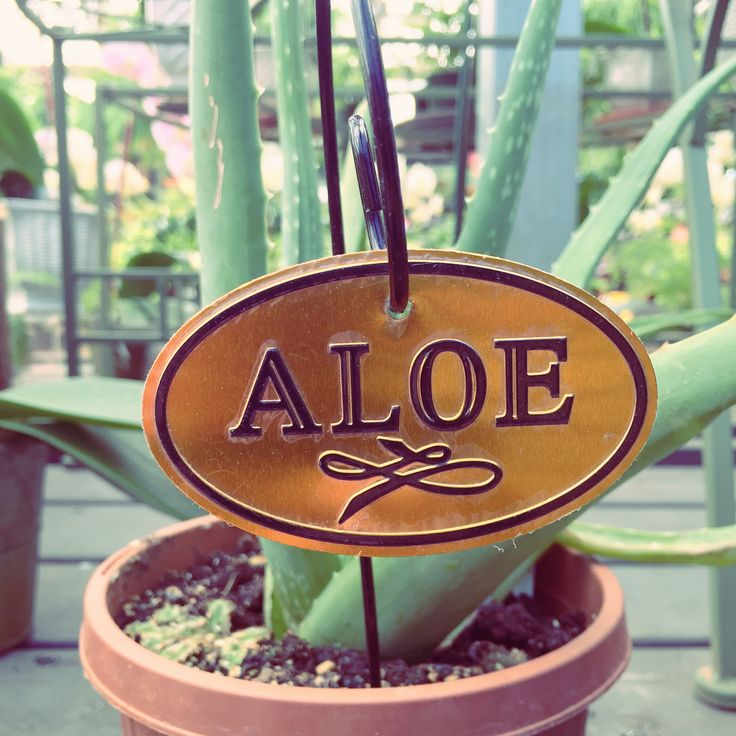 Elegant ... All Of The GREAT Benefits That You Can Get From Aloe. It Helps With  Sunburn, Burns, And So Much More! Get Your Very Own Plant At Bucks Country  Gardens!