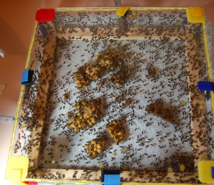 New observation hive. Connected/educted to strong OATH box. Day 2. Photo Megan Halcroft