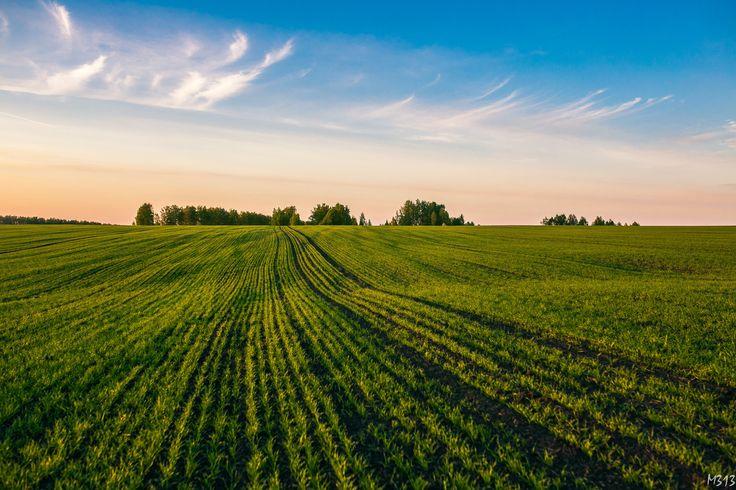 Freedom fields by Anastasia Krylova on 500px