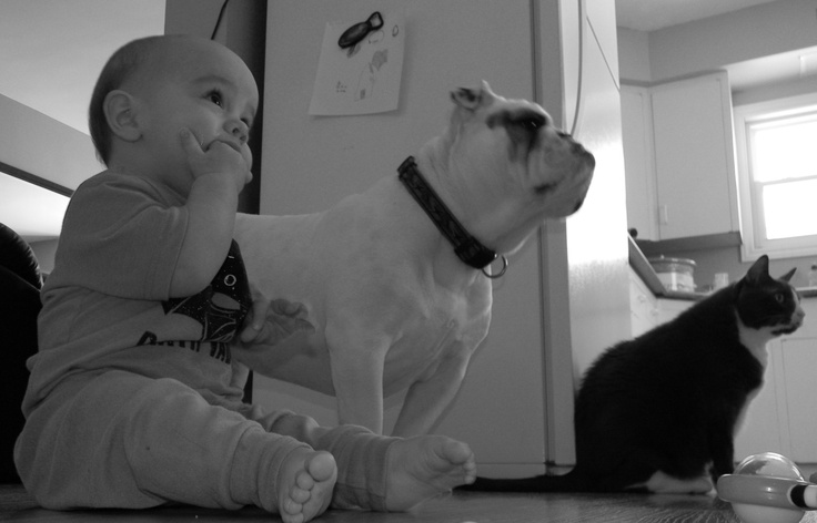 From left, Charlie the Baby, Snookie the Bulldog, Garfield the Cat.    The Kids!