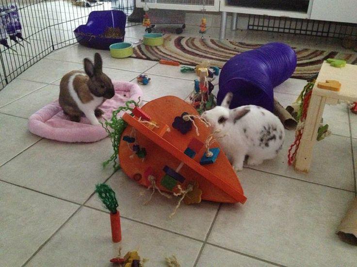 Crazy Carrot Rabbit Playground - HUGE - Happy Rabbit Toys