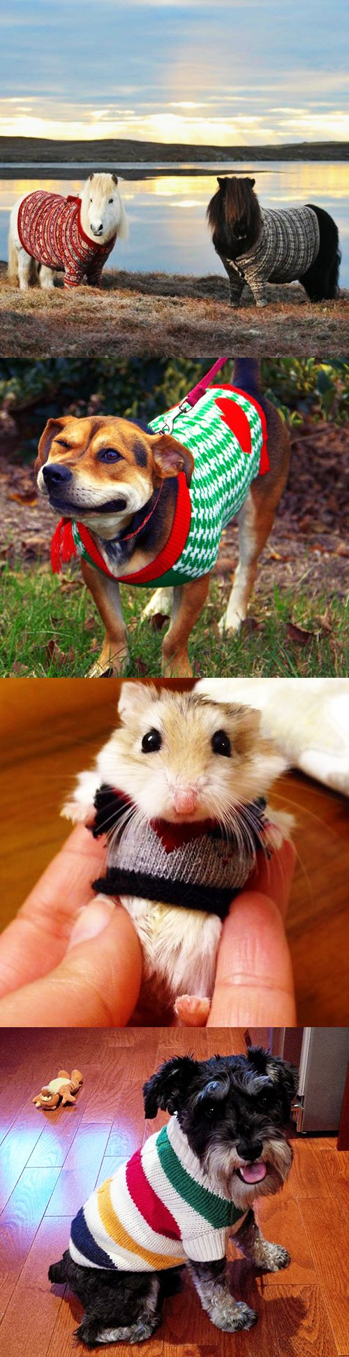 These pets are ready for sweater weather, are you?