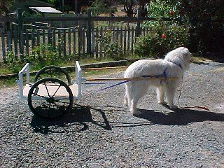 Building A Dog Cart From Pvc Would Be Awesome If The