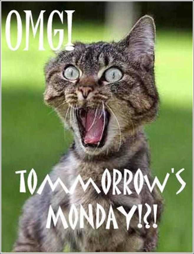 tomorrows Monday funny days of the week mondays humor