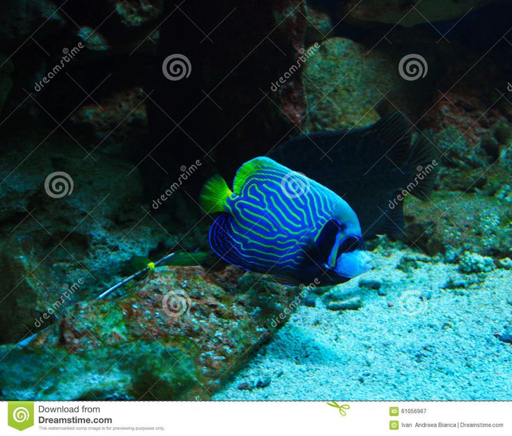 Exotic Fish - Download From Over 56 Million High Quality Stock Photos, Images, Vectors. Sign up for FREE today. Image: 61056967