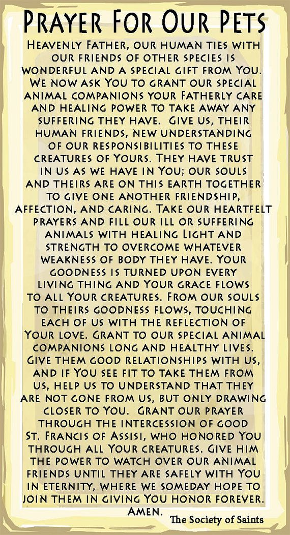 St. Francis of Assisi Prayer Card for Pets by TheSocietyofSaints