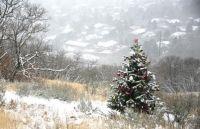 Ένα χριστουγεννιάτικο δέντρο στολίζεται μόνο του μυστηριωδώς