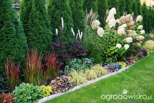 Ogrodowa przygoda Łukasza :) - strona 719 - Forum ogrodnicze - Ogrodowisko