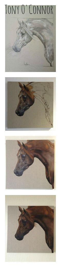 Pop-Up Equine Art Lesson with Tony O'Connor 'Sundance' oil on linen 60cmx60cm whitetreestudio.ie