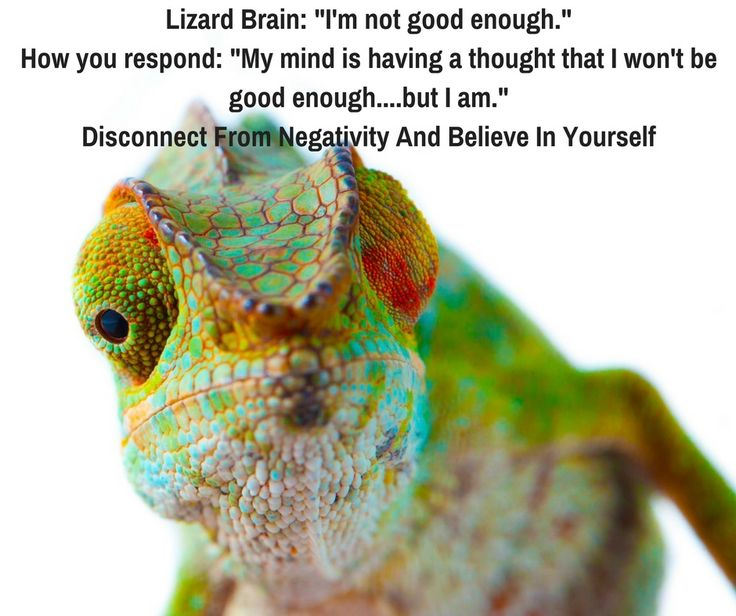 """""""I'm not good enough"""", """"I'm not smart enough"""", """"I'm not qualified enough""""…… Ever think this? If so, it's time to tame your Lizard brain and take charge. The 'Lizard brain' is the oldest part of the brain responsible for primitive survival instincts. Anatomically known as the Amygdala, it's responsible for our fight or flight response. …"""