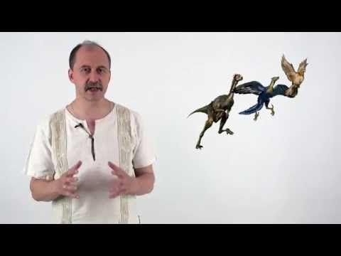 Мусорное биомоделирование. Позвоночные. Часть 3 - Птицы — Яндекс.Видео
