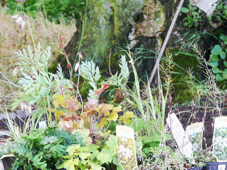 Lichtermeer Grabbepflanzung im Set für den Schatten
