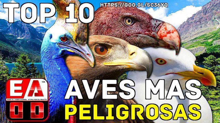 TOP 10 AVES MAS PELIGROSAS DEL MUNDO