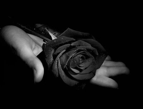 szál fekete rózsa - Google keresés