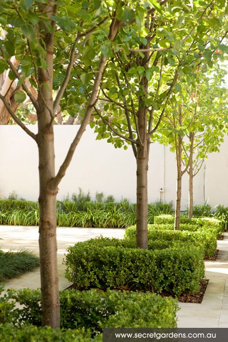 208 Best Trees Images On Pinterest Garden Trees Small Trees And - green tree garden design